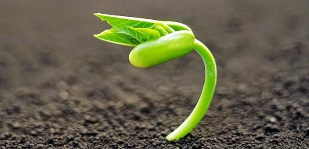 las-plantas-sienten-cuando-las-tocan